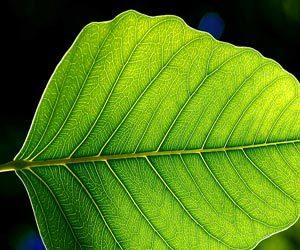 photo-leaf